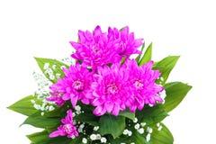 Purpurroter Dahlienblumenstrauß Stockbild