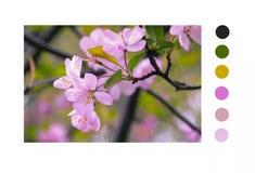 Purpurroter Frühling bestandene Schönheit stockfoto