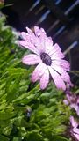 Purpurroter Garten nach dem Regen lizenzfreie stockbilder