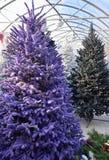 Purpurroter gespritzter Weihnachtsbaum stockbild