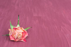 Trocknen Sie rosafarbenen Hintergrund Stockbild