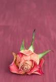 Rosafarbener Hintergrund der Vertikale Stockfoto