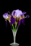 Purpurroter Irisblumenstrauß im Stemware Lizenzfreies Stockfoto