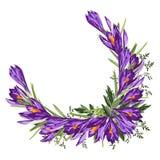 Purpurroter Krokus-Blumen-Kranz Aquarellartillustration auf weißem Hintergrund lizenzfreie abbildung
