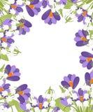 Purpurroter Krokus und wei?e Convallaria majalis Gr?nes Blumenmuster, Gras Flache Vektorillustration auf wei?em Hintergrund stock abbildung