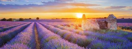 Purpurroter Lavendel archiviert in Valensole bei Sonnenuntergang Stockbilder