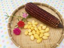 Purpurroter Mais mit Ginkgo Stockfoto
