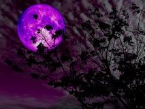 purpurroter Mondrückseitenschattenbildniederlassungs-Baumsonnenuntergang Lizenzfreie Stockfotos