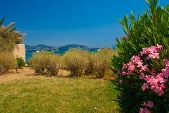 Purpurroter Oleander mit Seelandschaft Stockbilder