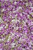 Purpurroter Orchideenblumenhintergrund Stockfoto