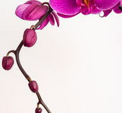 Orchideenhintergrund Lizenzfreie Stockbilder