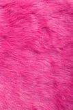 Purpurroter Pelz | Beschaffenheit Lizenzfreies Stockfoto
