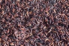 Purpurroter Reis Stockfoto