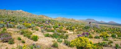 Purpurroter Salbei und gelbe wilde Blumen zeigen Ostern-Farben an stockfoto