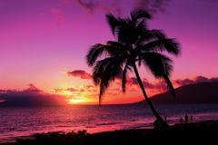 Purpurroter Sonnenuntergang Stockfoto