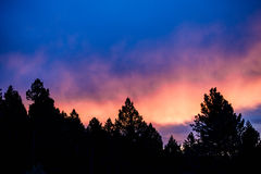 Purpurroter Sonnenuntergang im Baum-Schattenbild Stockfoto