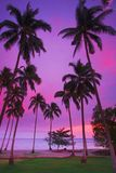 Purpurroter tropischer Sonnenuntergang Stockfoto