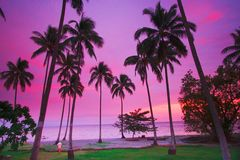 Purpurroter tropischer Sonnenuntergang Stockbilder