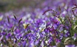 Purpurrotes Blumen-Bett Stockbild