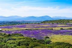 Purpurrotes Feld durch das Meer Lizenzfreie Stockfotografie