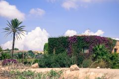 Purpurrotes flower power-Haus mit Palme Stockfotografie