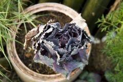 Purpurrotes Gemüse im Topf lizenzfreie stockbilder