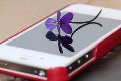 Purpurrotes heartsease am Handy screan mit Blumenreflexion Lizenzfreie Stockfotos