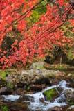 Purpurrotes Herbstlaub auf einem Hintergrund des Stromes Stockbild