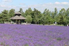 Purpurrotes Lavendel-Feld, Tomita-Bauernhof, Japan lizenzfreies stockfoto