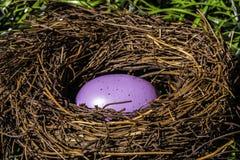 Purpurrotes Osterei im Vogel-Nest Stockfoto