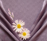 Purpurrotes Satingewebe mit Gänseblümchen Stockbilder