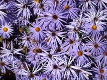 purpurt fotografering för bildbyråer
