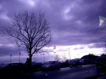 purpurt Arkivbild