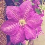 purpurt Arkivfoto