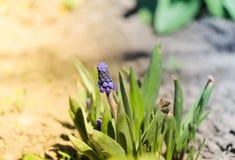 purpurt litet för blomma Arkivfoton