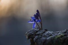 purpurt mycket litet för blomma Arkivbild