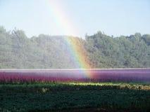 purpurt regn royaltyfri foto