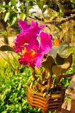 purpurt wild för orchids Arkivfoton