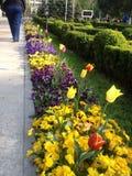 Purpury i kolor żółty Zdjęcie Stock