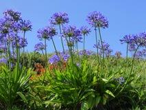 Purpury i pomarańczowi dzicy kwiaty Fotografia Royalty Free