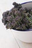 Purpury kiełkuje brokuły Fotografia Royalty Free