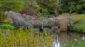 Purpury kwitn?li ?a?o?? wspina si? nad mostem przy RHS Wisley, statku flagowego Kr?lewski Ogrodniczy spo?ecze?stwo ogr?d, Surrey, fotografia stock