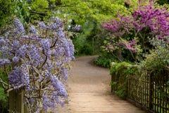 Purpury kwitn?li ?a?o?? wspina si? nad mostem przy RHS Wisley, statku flagowego Kr?lewski Ogrodniczy spo?ecze?stwo ogr?d, Surrey, fotografia royalty free