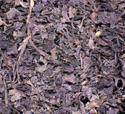 Purpury mleć pikantność, tekstura, tło obrazy stock
