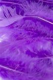 Purpury rzemiosła piórka Zdjęcia Stock