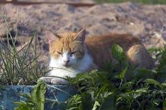 Purr γατών Στοκ Εικόνα