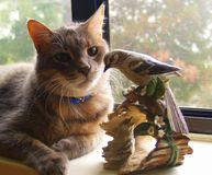Purrfect Friendship. A Cat observing a bird statue Stock Photography