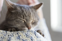Free Purring Cat Stock Photos - 87586743