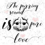 The purring sound is pure love, greeting card and motivational quote for pet lovers with typographic design. Stock Photos