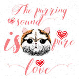 The purring sound is pure love, greeting card and motivational quote for pet lovers with typographic design. Royalty Free Stock Images
